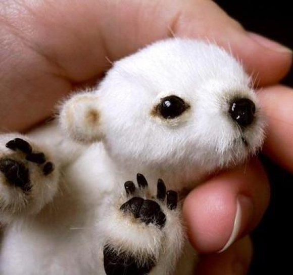 Hairless Polar Bear Cute baby polar bear?