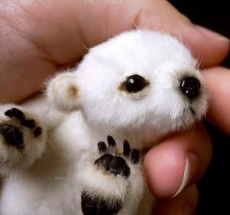 Unfortunately, this cute baby polar bear isn't real.
