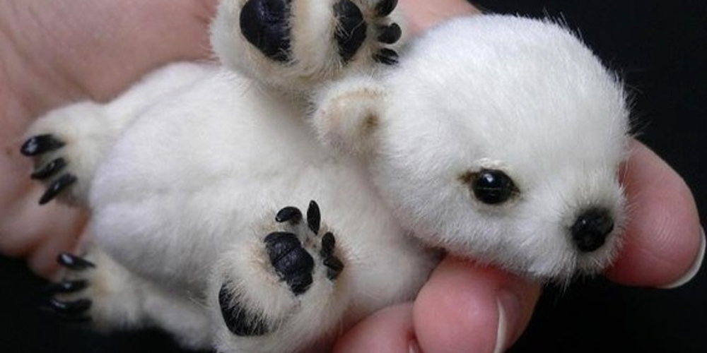 Cute Polar Bear Cub Or Is It Smprsn