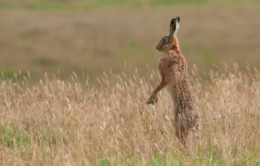 Winner of the 2014 Mammal Photography of the Year Award